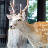 奈良公園の可愛い鹿